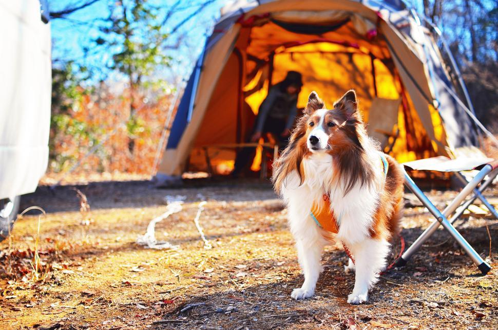 夢だったキャンピングカーを購入して、妻と愛犬との旅行も釣りも何倍も魅力的になりました。:写真